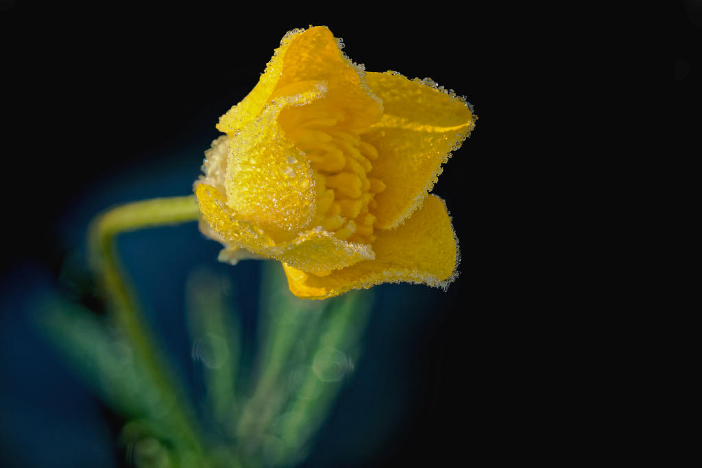 Gelb im Frost